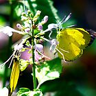 Yellow Butterflies by Guyzimij