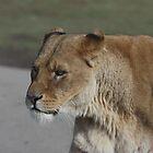 Lion Queen! by JohnBuchanan