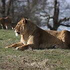 Enjoying a rest in the spring sunshine by JohnBuchanan