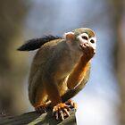 Just havin' lunch in a tree, chillaxin! by JohnBuchanan