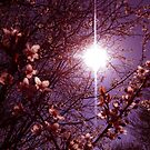 Magical Blossoms by Vicki Spindler (VHS Photography)