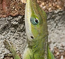 Green Anole by Otto Danby II