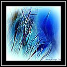 Blue Grass by MacroXscape