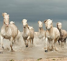 White Horses of The Camargue by jennialexander