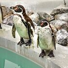 Penguins by playfulkit