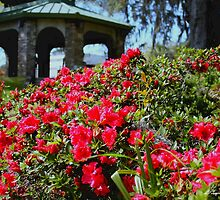 Pavilion and Azaleas  by dforand