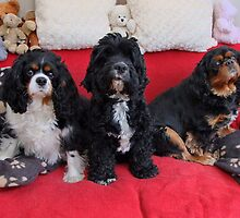 Charlie Girl and Poppy with Friend Snooby by AnnDixon