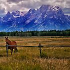 A Horse In the Mountains by Kathy Weaver