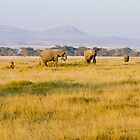 African Savanna by Pravine Chester