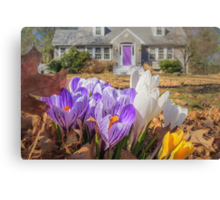 Welcome mat of Spring crocuses Canvas Print