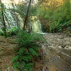 Dip Falls, northern Tasmania. by Kevin McGennan