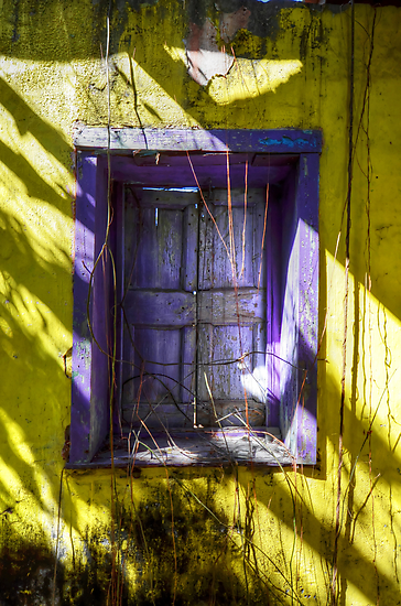 Purple on Yellow... by Jeremy Lavender Photography