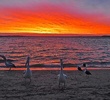 Birds on the beach at sunset. by Ian Berry