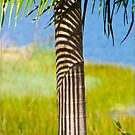 Palm Shadows by Chris Cohen