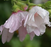 holly hocks in the rain (3) by CecilysSong