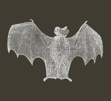 Classic engraving Bat by cisnenegro