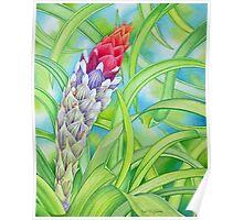 Tropical Bromeliad Poster