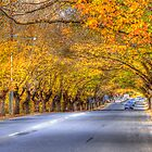 Hahndorf II, Adelaide Hills SA by Mark Richards