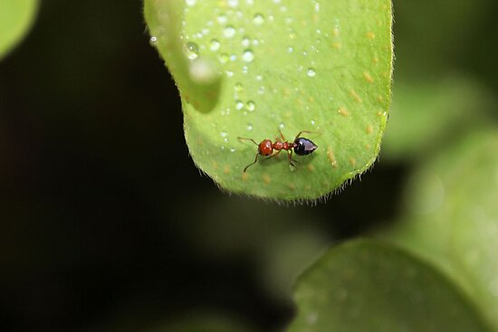 Go to the ant, thou sluggard; consider her ways, and be wise by aprilann