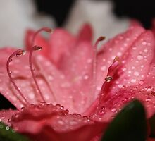 Rain on the Azaleas by aprilann