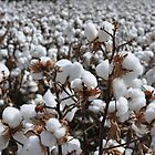 cotton  by quigley1993