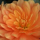 dahlia -  #6932 by gaylene