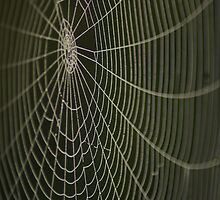 Dew drop spider-web by MilesWithArt