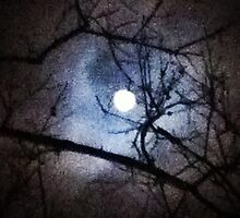 The Full Moon Between Branches by Kieran Rundle