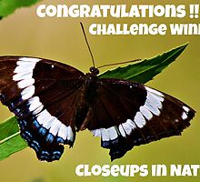 Closeups in Nature Challenge winner entry by Jeanette Muhr