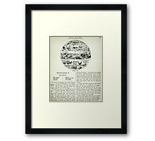am t 25a right swinton (fauna by zone) R Framed Print