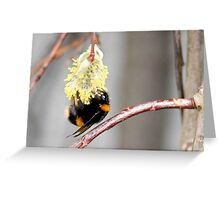 First pollen of spring Greeting Card