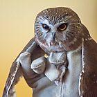Rescued Barn Owl by gharris