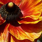 Flower in the Garden #7 by AmishElectricCo