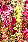 MIFGS - Orchids - One by Sammy Nuttall
