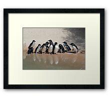 Fairy Penguin n Reflection Framed Print