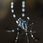 Aedes by Kelvin Won