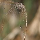 Sparkling Spider Web by Tracy Faught