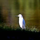 Only a Small Egret by LawrencePhoto