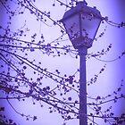 Blue Spring 3 by kahoutek24
