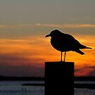 Seagull Silhouette at Sunset by Monte Morton