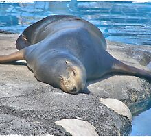Seal Sleeping by Infinite2000