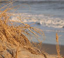 A Day at the Beach by Sandy Woolard