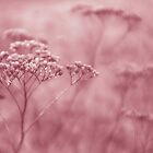 Nature in pink by Anne Staub