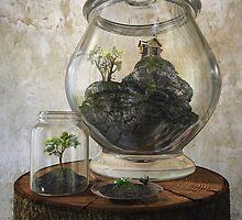 Terrarium by Cynthia Decker