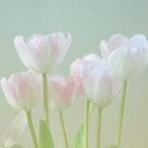 Spring&#x27;s Pastels by Kim Hojnacki