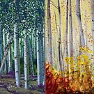 A Year in an Aspen Forest by Constance Widen