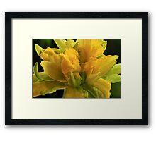 Curly Daffodil Framed Print