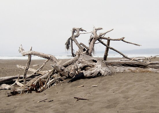 Driftwood by jedesigns