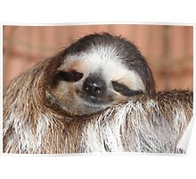 Buttercup the Sloth Poster