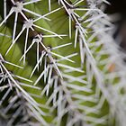 Up Close and Spiny by GRoskamMedia